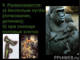9. Размножаются: а) бесполым путём (почкование, деление); б) при помощи половых