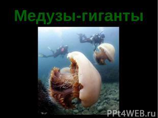 Медузы-гиганты