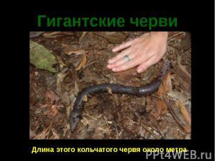 Гигантские черви
