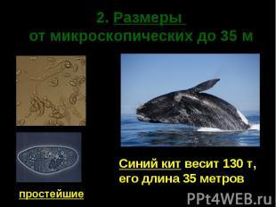 2. Размеры от микроскопических до 35 м