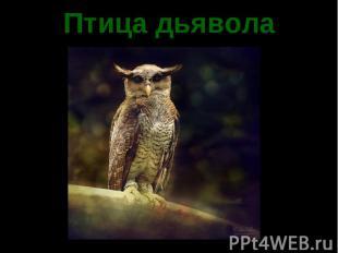 Птица дьявола