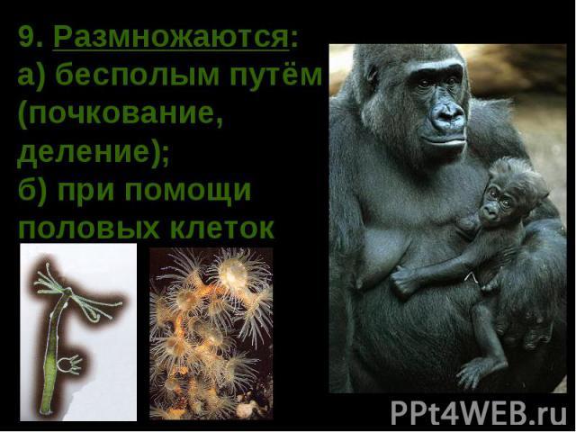 какие животные плод¤тс¤ без портнера