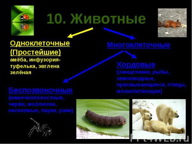 10. Животные