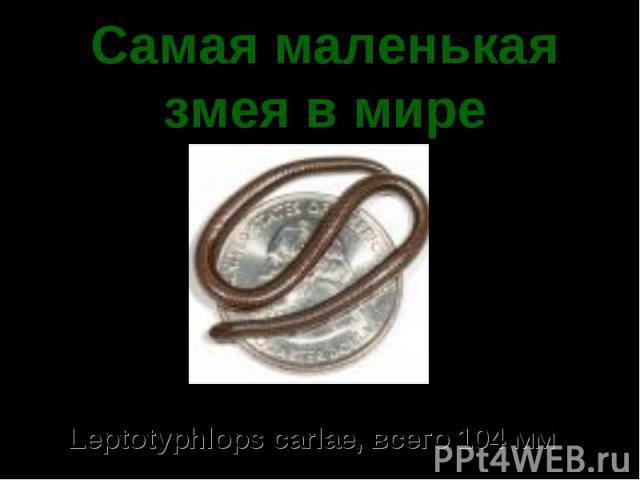 Самая маленькая змея в мире