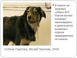 В опытах на здоровых собаках И.П Павлов изучил основные закономерности деятельно
