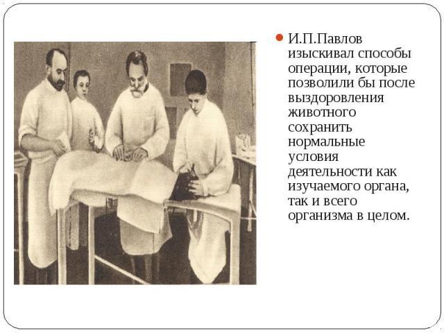 И.П.Павлов изыскивал способы операции, которые позволили бы после выздоровления животного сохранить нормальные условия деятельности как изучаемого органа, так и всего организма в целом. И.П.Павлов изыскивал способы операции, которые позволили бы пос…