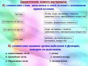 Б) соотнесите название органа выделения и функцию, которую он выполняет. Б) соот