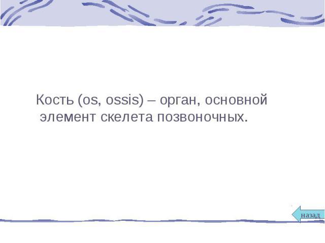 Кость (os, ossis) – орган, основной элемент скелета позвоночных. Кость (os, ossis) – орган, основной элемент скелета позвоночных.