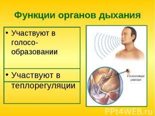 Функции органов дыхания Участвуют в голосо-образовании
