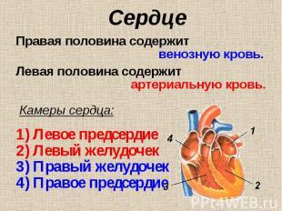 Правая половина содержит Правая половина содержит венозную кровь. Левая половина