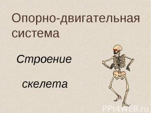 Строение Строение скелета
