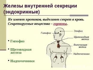 Не имеют протоков, выделяют секрет в кровь. Секретируемые вещества – гормоны. Не