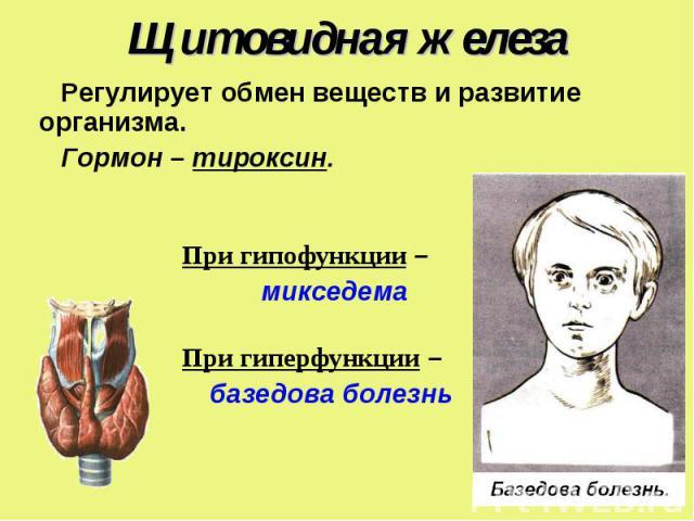 Регулирует обмен веществ и развитие организма. Регулирует обмен веществ и развитие организма. Гормон – тироксин. При гипофункции – микседема При гиперфункции – базедова болезнь