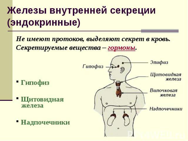 Не имеют протоков, выделяют секрет в кровь. Секретируемые вещества – гормоны. Не имеют протоков, выделяют секрет в кровь. Секретируемые вещества – гормоны. Гипофиз Щитовидная железа Надпочечники