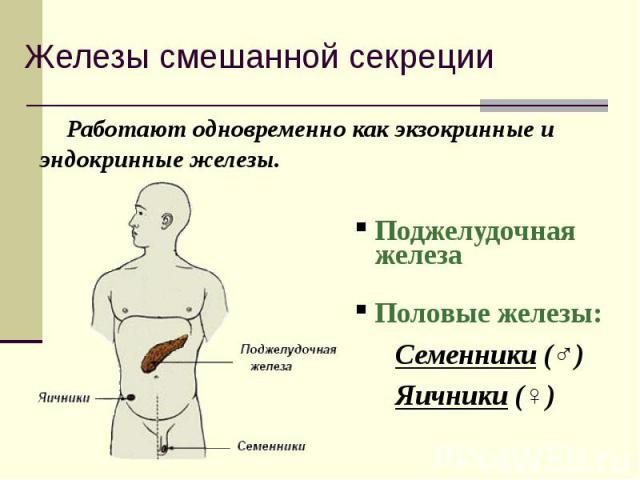 Работают одновременно как экзокринные и эндокринные железы. Работают одновременно как экзокринные и эндокринные железы. Поджелудочная железа Половые железы: Семенники (♂) Яичники (♀)