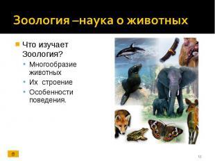 Что изучает Зоология? Что изучает Зоология? Многообразие животных Их строение Ос