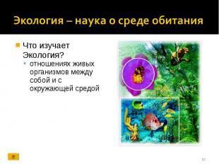 Что изучает Экология? Что изучает Экология? отношениях живых организмов между со