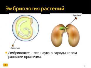 Эмбриология – это наука о зародышевом развитии организма. Эмбриология – это наук