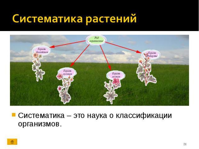 Систематика – это наука о классификации организмов. Систематика – это наука о классификации организмов.