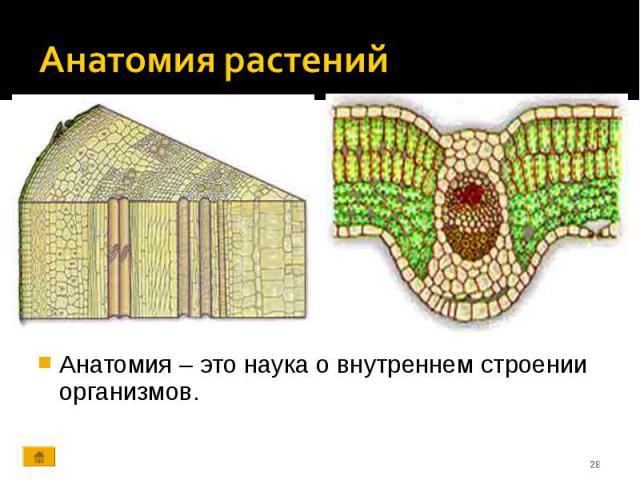 Анатомия – это наука о внутреннем строении организмов. Анатомия – это наука о внутреннем строении организмов.