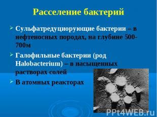 Сульфатредуциорующие бактерии – в нефтеносных породах, на глубине 500-700м Сульф