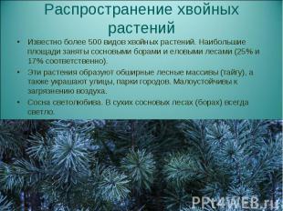 Известно более 500 видов хвойных растений. Наибольшие площади заняты сосновыми б