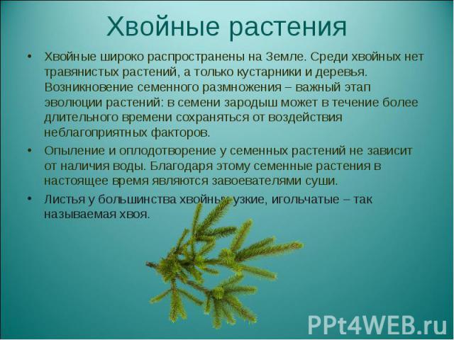 Хвойные широко распространены на Земле. Среди хвойных нет травянистых растений, а только кустарники и деревья. Возникновение семенного размножения – важный этап эволюции растений: в семени зародыш может в течение более длительного времени сохранятьс…
