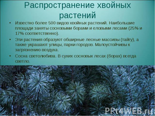 Известно более 500 видов хвойных растений. Наибольшие площади заняты сосновыми борами и еловыми лесами (25% и 17% соответственно). Известно более 500 видов хвойных растений. Наибольшие площади заняты сосновыми борами и еловыми лесами (25% и 17% соот…