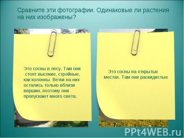 Сравните эти фотографии. Одинаковые ли растения на них изображены? Сравните эти фотографии. Одинаковые ли растения на них изображены?