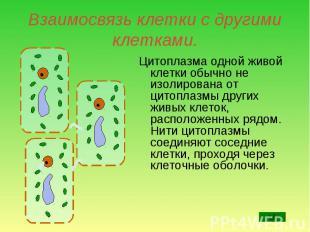 Цитоплазма одной живой клетки обычно не изолирована от цитоплазмы других живых к