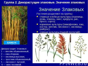 Растения разделяют на группы: Растения разделяют на группы: главные хлебные куль