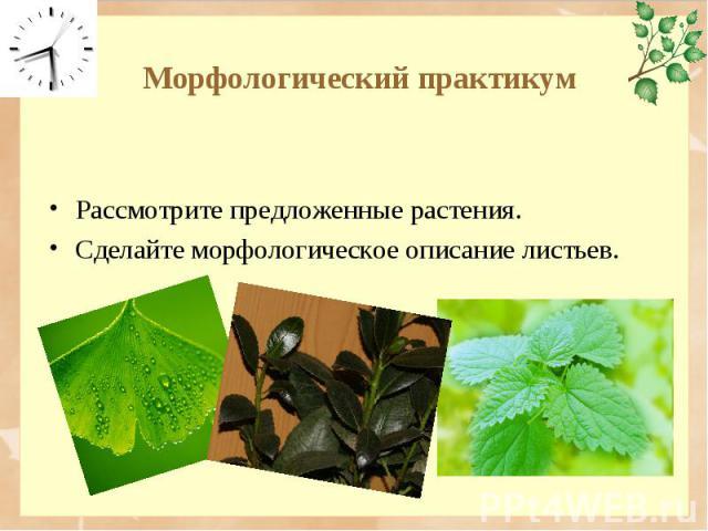 Рассмотрите предложенные растения. Рассмотрите предложенные растения. Сделайте морфологическое описание листьев.
