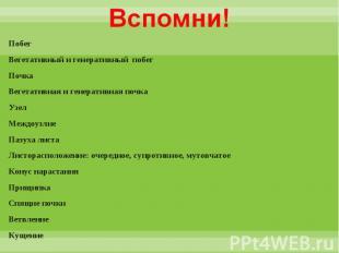Побег Побег Вегетативный и генеративный побег Почка Вегетативная и генеративная