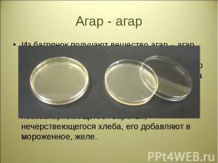 Из багрянок получают вещество агар – агар. Уже 20г агара на 1л воды после остыва