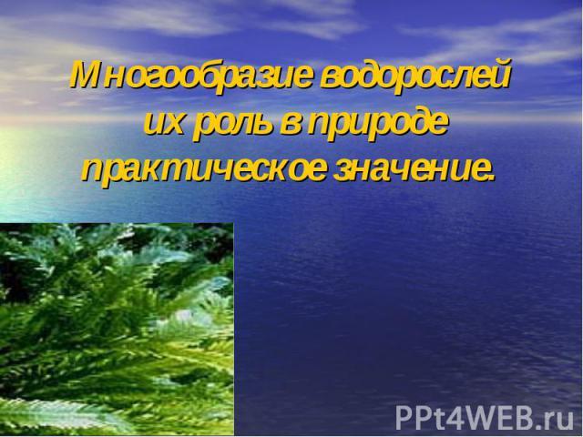 Многообразие водорослей их роль в природе практическое значение.
