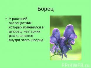 У растений, околоцветник которых изменился в шпорец, нектарник располагается вну