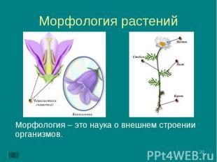 Морфология – это наука о внешнем строении организмов. Морфология – это наука о в