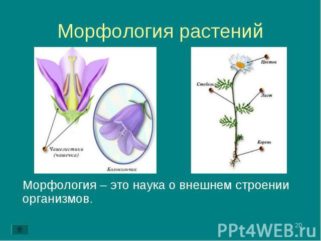 Морфология – это наука о внешнем строении организмов. Морфология – это наука о внешнем строении организмов.