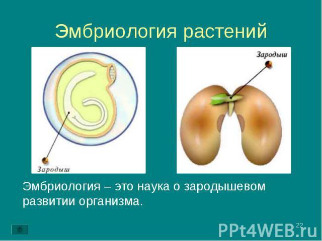 Эмбриология – это наука о зародышевом развитии организма. Эмбриология – это наука о зародышевом развитии организма.
