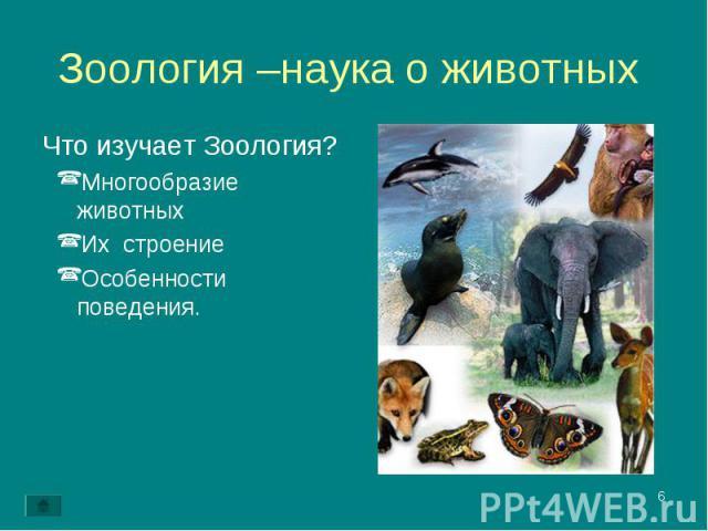 Что изучает Зоология? Что изучает Зоология? Многообразие животных Их строение Особенности поведения.