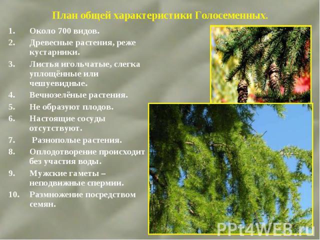 Около 700 видов. Около 700 видов. Древесные растения, реже кустарники. Листья игольчатые, слегка уплощённые или чешуевидные. Вечнозелёные растения. Не образуют плодов. Настоящие сосуды отсутствуют. Разнополые растения. Оплодотворение происходит без …