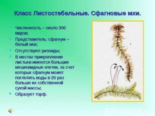 Численность – около 300 видов; Численность – около 300 видов; Представитель: сфа