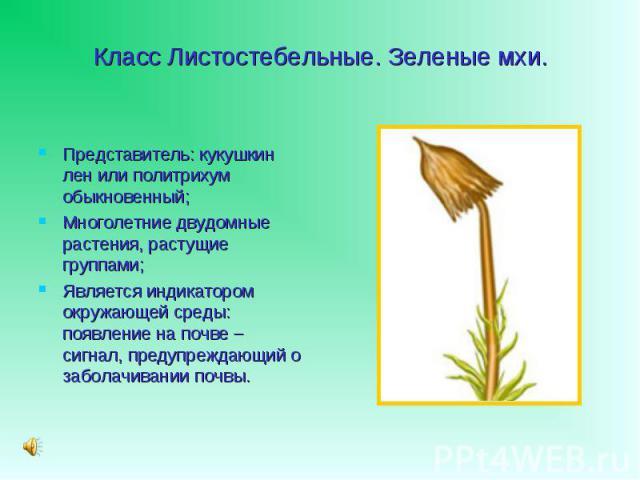 Представитель: кукушкин лен или политрихум обыкновенный; Представитель: кукушкин лен или политрихум обыкновенный; Многолетние двудомные растения, растущие группами; Является индикатором окружающей среды: появление на почве – сигнал, предупреждающий …