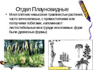 Многолетние невысокие травянистые растения, часто вечнозеленые, с прямостоячими