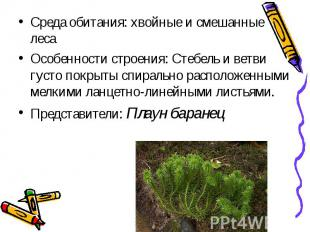 Среда обитания: хвойные и смешанные леса Среда обитания: хвойные и смешанные лес