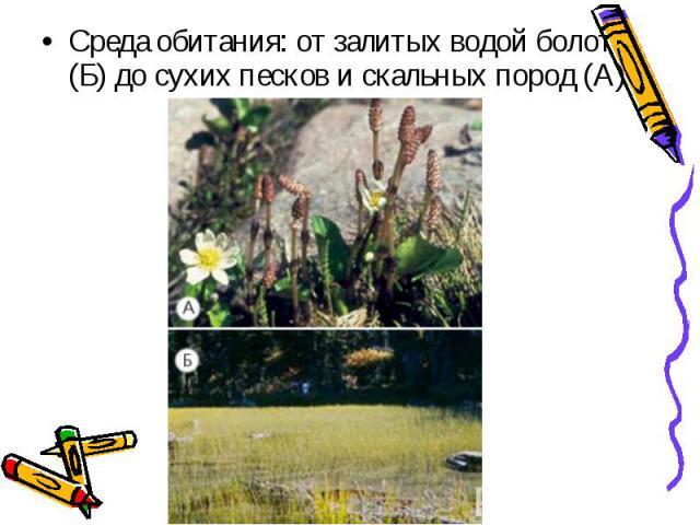 Среда обитания: от залитых водой болот (Б) до сухих песков и скальных пород (А) Среда обитания: от залитых водой болот (Б) до сухих песков и скальных пород (А)
