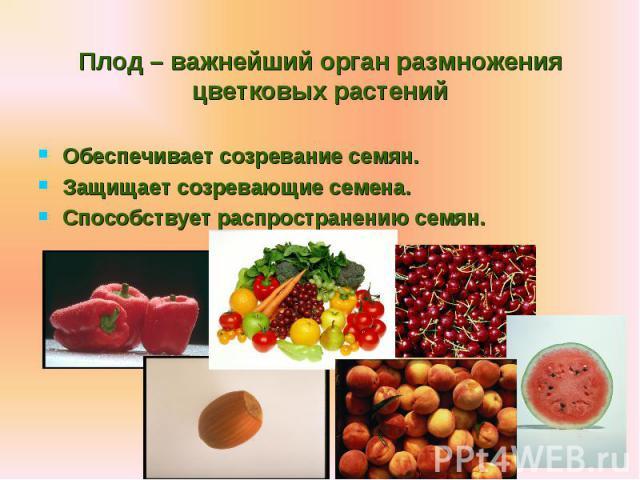 Обеспечивает созревание семян. Обеспечивает созревание семян. Защищает созревающие семена. Способствует распространению семян.