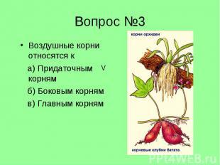 Воздушные корни относятся к Воздушные корни относятся к а) Придаточным корням б)