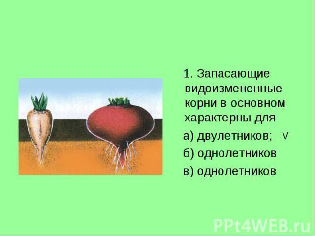 1. Запасающие видоизмененные корни в основном характерны для 1. Запасающие видоизмененные корни в основном характерны для а) двулетников; б) однолетников в) однолетников