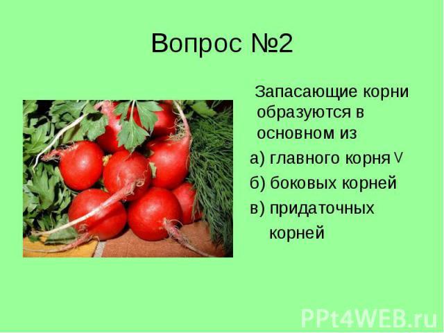 Запасающие корни образуются в основном из Запасающие корни образуются в основном из а) главного корня б) боковых корней в) придаточных корней